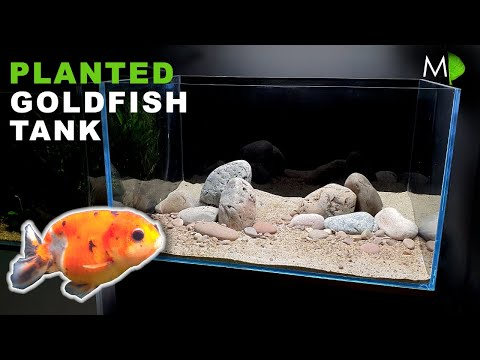 MAKING A PLANTED GOLDFISH AQUARIUM | MD FISH TANKS