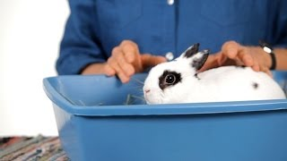 Can I Keep a Rabbit in My Child's Room? | Pet Rabbits