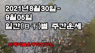 2021년8월30일-9월05일 일간(日干)별 주간운세
