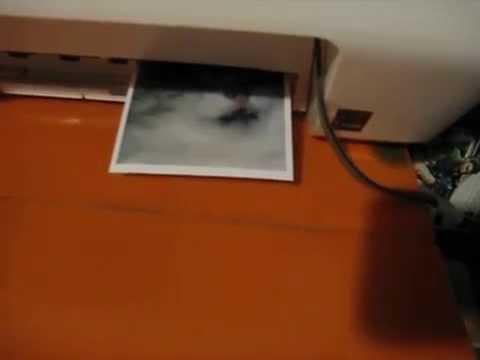 Распечатка фото на МФУ Canon PIXMA MG2440.
