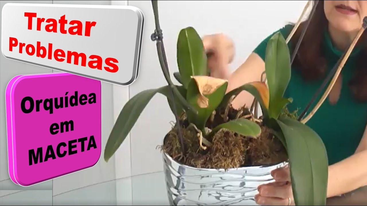 Cómo cuidar de tu orquídea en una maceta - Vida a lo Verde - YouTube