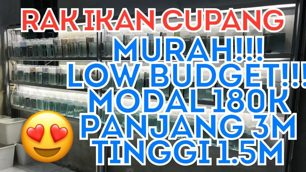 Rak ikan cupang MURAH!!! Modal Rp. 180.000 - YouTube