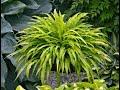 Awesome Shade Perennials/June Garden Tour/Garden Style nw