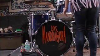 Gambar cover Los Mandragora