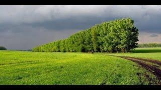По 500 гектаров каждый год  В Украине массово уничтожают лесополосы