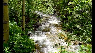 4.98 Acres Creekfront Land Surrounded By National Forest Near Black Hawk CO 80422