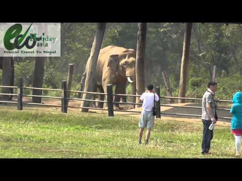 Wild Elephant in Chitwan National Park -Eco Holiday Asia