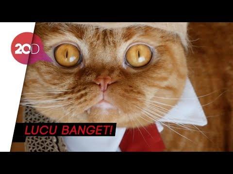 Download 89+  Gambar Kucing Ekspresi Lucu Paling Baru HD