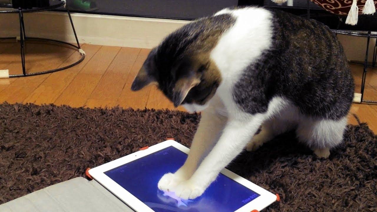 Ipad cat fishing 2 funnycat tv for Cat fishing 2