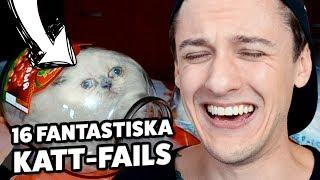 16 Fantastiska Bilder På Katter Som FAILAT TOTALT!