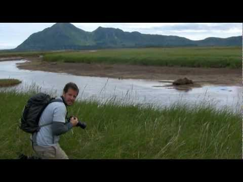 Guided Bear Viewing Trips To Hallo Bay & Brooks | Central Charters & Tours | Homer, Alaska