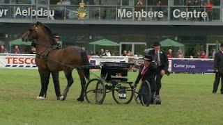 Supreme Horse Championship | Prif Bencampwriaeth y Sioe