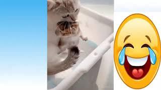 Animais de Estimação, Cachorros, Gatos Fofos e Engraçados | Compilação de  Pets