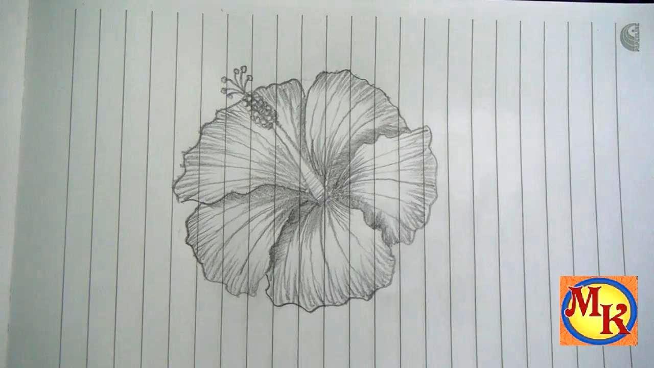 Cara Menggambar Bunga Kembang Sepatu Speed Drawing Youtube