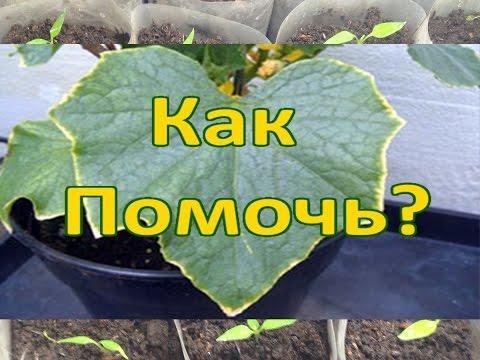 Вопрос: Для чего растениям листья?