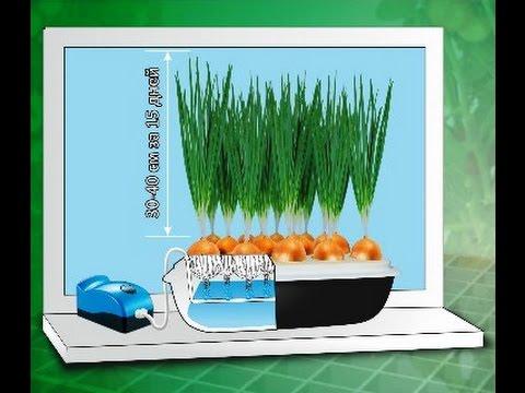 Выращивание зеленых на гидропонике 561