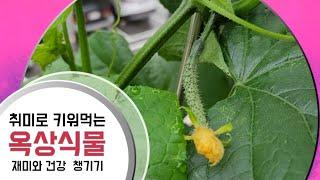 옥상식물키우기/취미로 식물키우기/건강하게 키워서 따먹기…