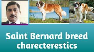 Saint Bernard Dog Breed Charecterestics
