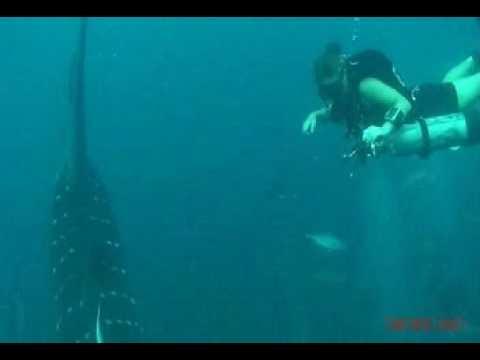Whale shark in panama city beach fl youtube for Shark fishing panama city beach