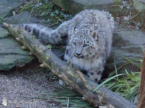 Snow Leopard Conservancy · Dr. Rodney Jackson · Chicago Expo 2015