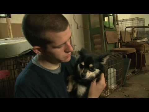 Mississippi Puppy Mill Raid