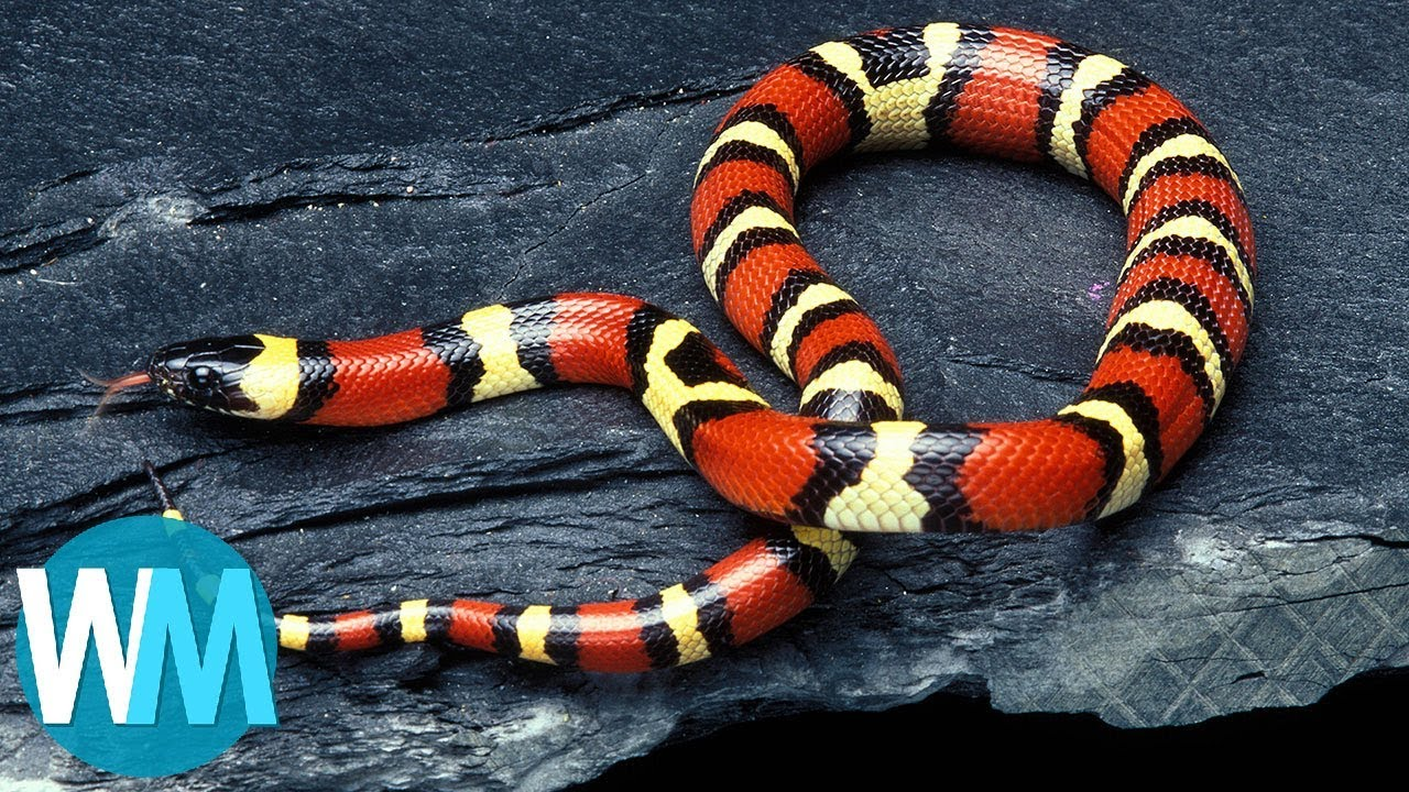 11 absolutely harmless animals that people fear to death 24Warez.Ru