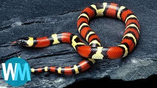 Top 10 Animals - Top 10 Harmless Animals That People Are Scared Of