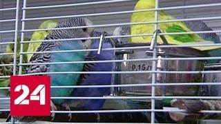 Питомник или камера пыток: активисты проверили магазин экзотических животных
