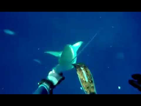 Нападение акул в Красном море