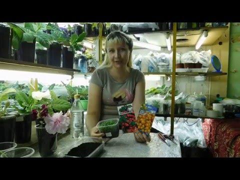 Чем подкормить петунию, чтобы получить обильное цветение?