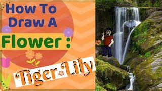 How to Draw A Flower - Tiger Lily