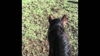 Horse in a hurry to barn- Direction better than correction- Rick Gore Horsemanship