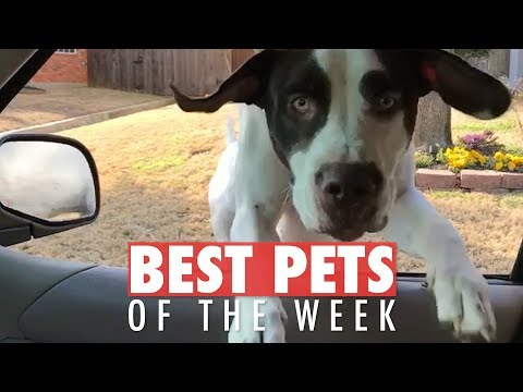 Best Pets of the Week Video Compilation | February 2018…