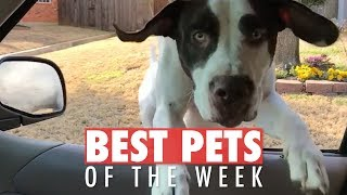 Best Pets of the Week Video Compilation | February 2018 Week 2