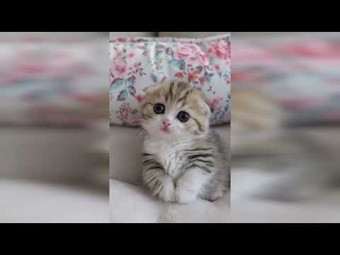 😻 Cutest Kitten | Most Adorable Kittens Video  | Compilation 2020