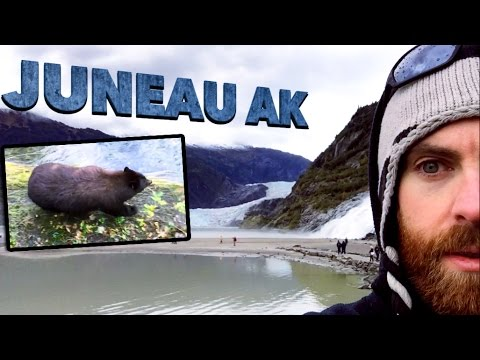 Bears & Glaciers in Juneau Alaska | Cruise Day 3