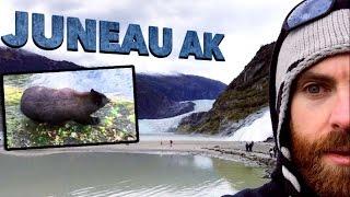 Bears & Glaciers in Juneau Alaska | Cruise Day 3