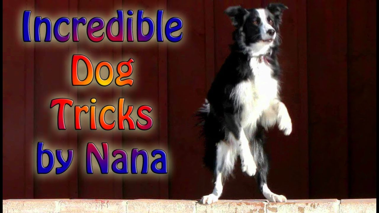 how to teach dogs tricks without a clicker
