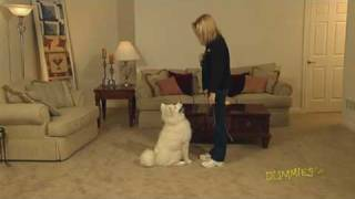 How To Teach Your Dog To Sit On Command For Dummies