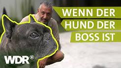 Dem Hund Grenzen setzen | Hunde verstehen (1) | Tierratgeber | WDR