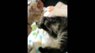 猫パンチ炸裂.