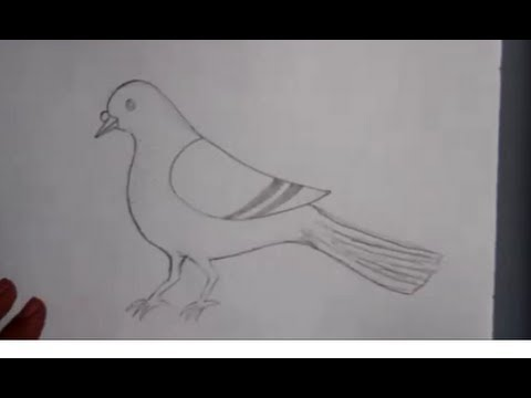 How to draw a pigeon  YouTube