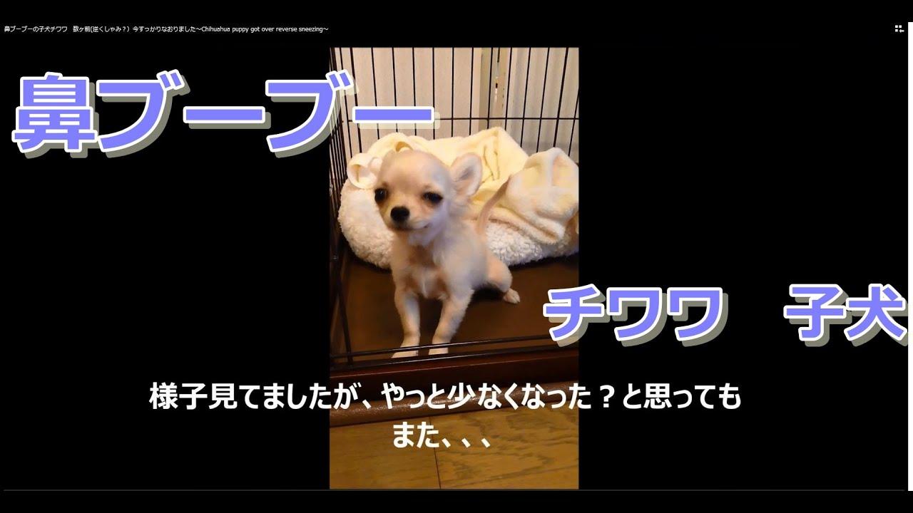 くしゃみ 子犬