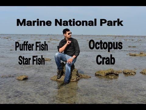Gujarat, Jamanagr Narara Marine National Park - Octopus,Puffer fish,Crabs..Marine life in india.