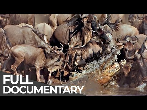 ► Serengeti - The Adventure (Full Documentary, HD)