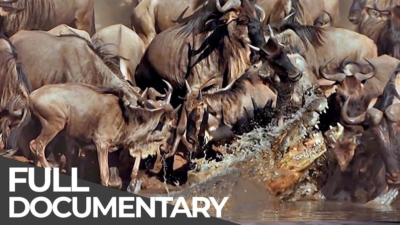 Serengeti: The Adventure