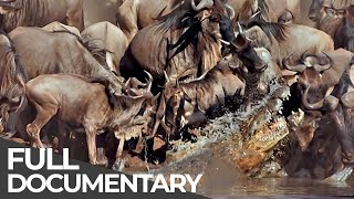 Serengeti - The Adventure (Full Documentary, HD)