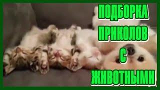 Приколы с Животными #6. Лучший Котик-Спящий Котик! Ничего не натворит! Подборка 2020 !