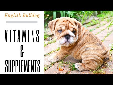 vitamins-and-supplements-for-english-bulldog