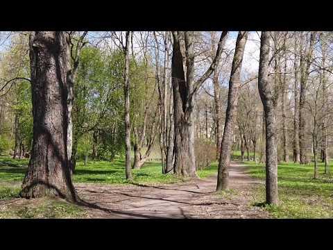Жизнь в Зеленогорске на карантине течёт медленно